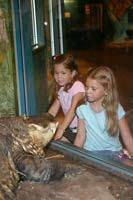 Sarah and Becca face off with an American Alligator at the Cleveland Museum of Natural History.