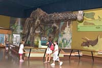 The only complete Haplocanthasaurus dephsi is on display at the Cleveland Museum of Natural History.