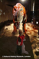 A child meets the T.rex. at the Natural History Museum of London.