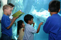 A boy uses the Weird, Wild and Wonderful Passport Book to identify fish at the Aquarium of the Pacific, Long Beach, CA