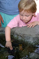 A child touches a purple sea urchin in the Rocky Intertidal exhibit at the Aquarium of the Pacific, Long Beach, CA
