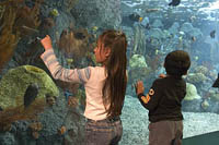 Children watch the balloonfish at the Aquarium of the Pacific, Long Beach, CA