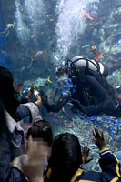 Volunteer scuba diver greets viewera at the Tropical Reef exhibit at the Aquarium of the Pacific, Long Beach, CA