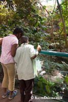 Children look at an alligator in the Tropical Forest ecosystem in the Biodme in Montreal.  Kayte Deioma